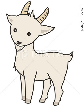 動物 ヤギ 山羊 白色のイラスト素材 Pixta