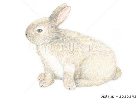 うさぎ 動物 ウサギ リアルのイラスト素材を検索中(26件中1件 , 26件を表示)