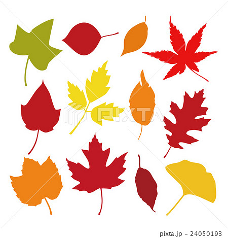秋の葉 紅葉