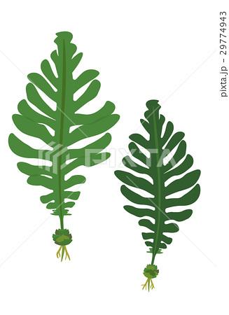 海藻のイラスト素材集 Pixtaピクスタ