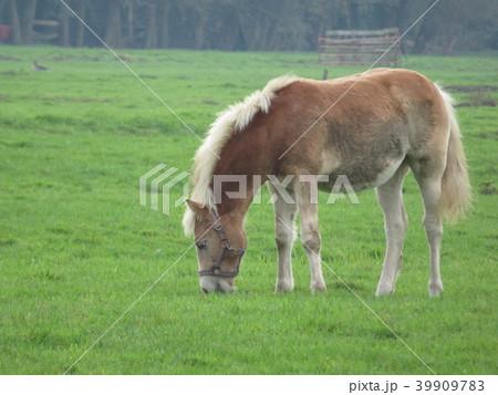 四肢動物 大きいの写真素材 - PI...