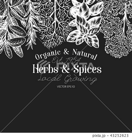 Culinary Herbs And Es Banner Template Vector Background For Design Menu Packaging Recipes Stock Ilration 43252623 Pixta