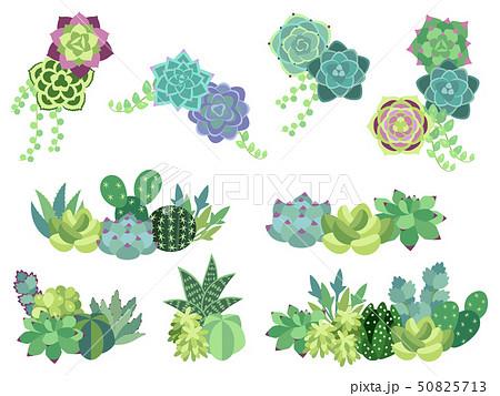 多肉植物のイラスト素材 Pixta